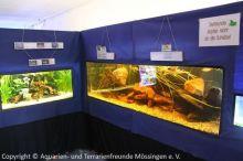 Ausstellung_2013_Kaltwasseraquarium_mit_einheimischen_Fische_01n