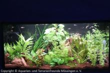 Ausstellung_2013_Pflanzenaquarium_mit_Keilfleckbaerblingen__LED-Beleuchtung_01