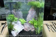 Aquascaping_02