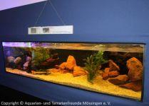 2Meter_Aquarium_mit_Grossfischen