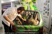 12_Regenwaldauto