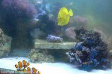 Einweihung_Meerwasseraquarium_Kinderklinik_13