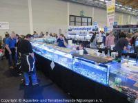Aqua-Fisch-2016_04