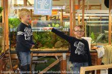 Jugend-Aquarium-einrichten_02