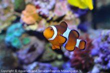 Meerwasser-Aquaristik_03