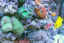 Meerwasser-Aquaristik_25