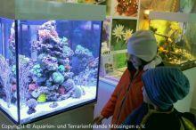 Meerwasser-Aquaristik_28