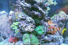 Meerwasser-Aquaristik_24