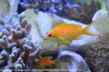 Meerwasser-Aquaristik_16