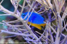 Meerwasser-Aquaristik_12