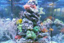 Meerwasser-Aquaristik_23