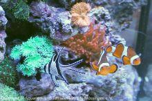 Meerwasser-Aquaristik_27