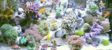 Meerwasser-Aquaristik_22
