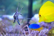 Meerwasser-Aquaristik_06