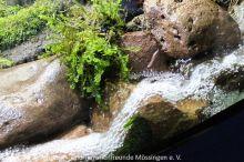 Suesswasseraquaristik_18