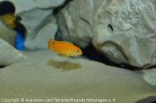 Suesswasseraquaristik_36