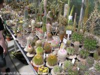 Fuehrung-Botanischer-Garten-Tuebingen_21