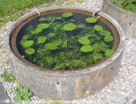 Fuehrung-Botanischer-Garten-Tuebingen_06