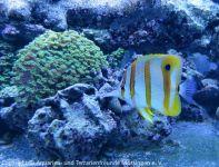 Besuch_bei_Fauna-Marin_(Wasseranalyse)_03