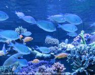 Besuch_bei_Fauna-Marin_(Wasseranalyse)_02