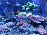 Besuch_bei_Fauna-Marin_(Wasseranalyse)_05