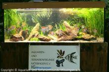 002_Unser_1,60m-Praesentations-Aquarium