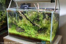 040_Aussteller-Aquarium