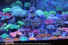 031_Korallenangebot