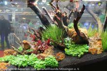 045_Aussteller-Aquarium