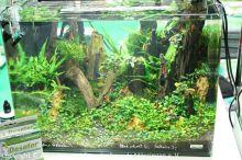 041_Aussteller-Aquarium