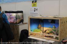 Fisch-und-Reptil-2017_Verein_15