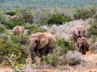 02_Suedafrika_Elefanten