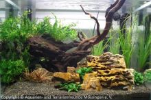 08Schauaquarium_auf_der_Aqua-Fisch