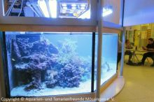 Pflege_Kinderklinik-Aquarium_Sept2018_21