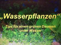 Wasserpflanzen1