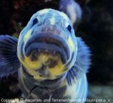 Aquarium_Heinz_15