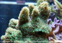 Aquarium_Heinz_09