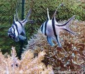 Aquarium_Heinz_13