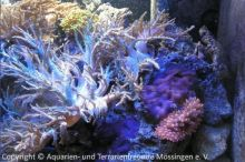 Aquarien_Musch_07