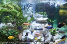 Aquarien-unserer-Ausstellungen_18