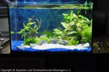 Aquarien-unserer-Ausstellungen_09
