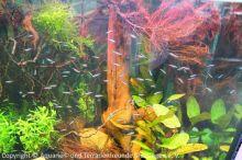 Aquarien-unserer-Ausstellungen_17