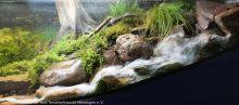 Aquarien-unserer-Ausstellungen_19