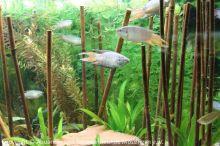 Aquarien-unserer-Ausstellungen_14
