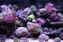 Aquarien-unserer-Ausstellungen_05