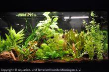 Aquarien-unserer-Ausstellungen_06