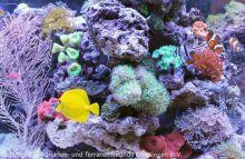 Aquarien-unserer-Ausstellungen_15