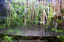 Aquarien-unserer-Ausstellungen_04