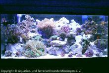Aquarien-unserer-Ausstellungen_10