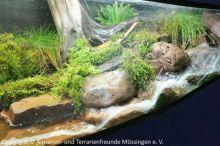 Aquarien-unserer-Ausstellungen_20